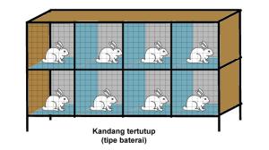 Kandang Kelinci Tipe Baterai