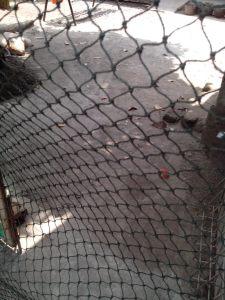 Jaring Kandang Ayam