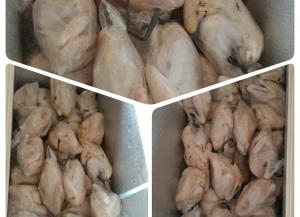 Daging Ayam Kampung Super