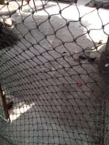 Jaring Kandang Ayam Paranet