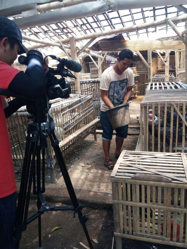 Proses untuk Pemberian Pakan Ayam Kalkun