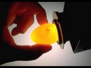 Peneropongan telur ayam