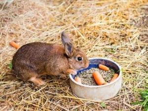 Nafsu makan kelinci menurun